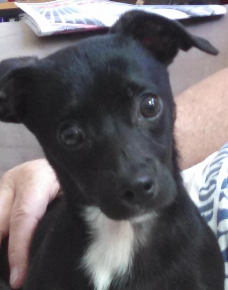 Adopt Wyatt On Adoptable Dachshund Dog Dogs Adoption