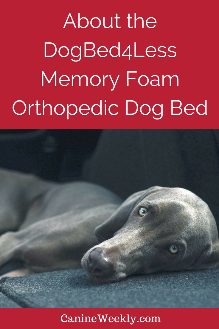 5 Best Orthopedic Dog Beds for Large Breeds in 2020 Best