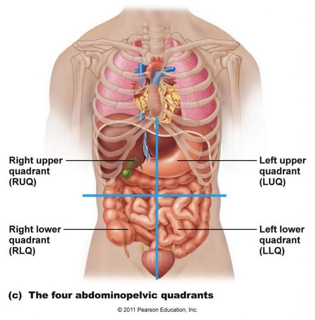 Female Abdominal Anatomy Images  Female Abdominal Anatomy