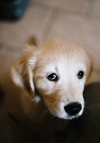 Pin Di Allegra2015 Tesora Su Cuccioli Carinissimi Animali