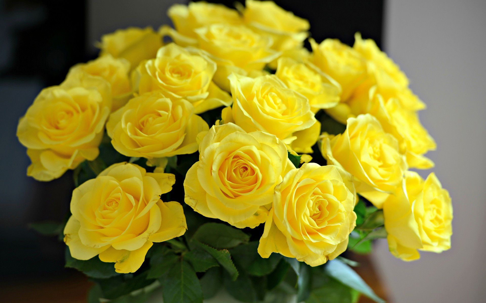 yellow rose wallpapers high quality download free 2048a—1360 yellow rose image wallpapers 55