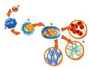 علاج الفشل الكلوي بالخلايا الجذعية Kidney Disease Diet Chinese Medicine Kidney Disease