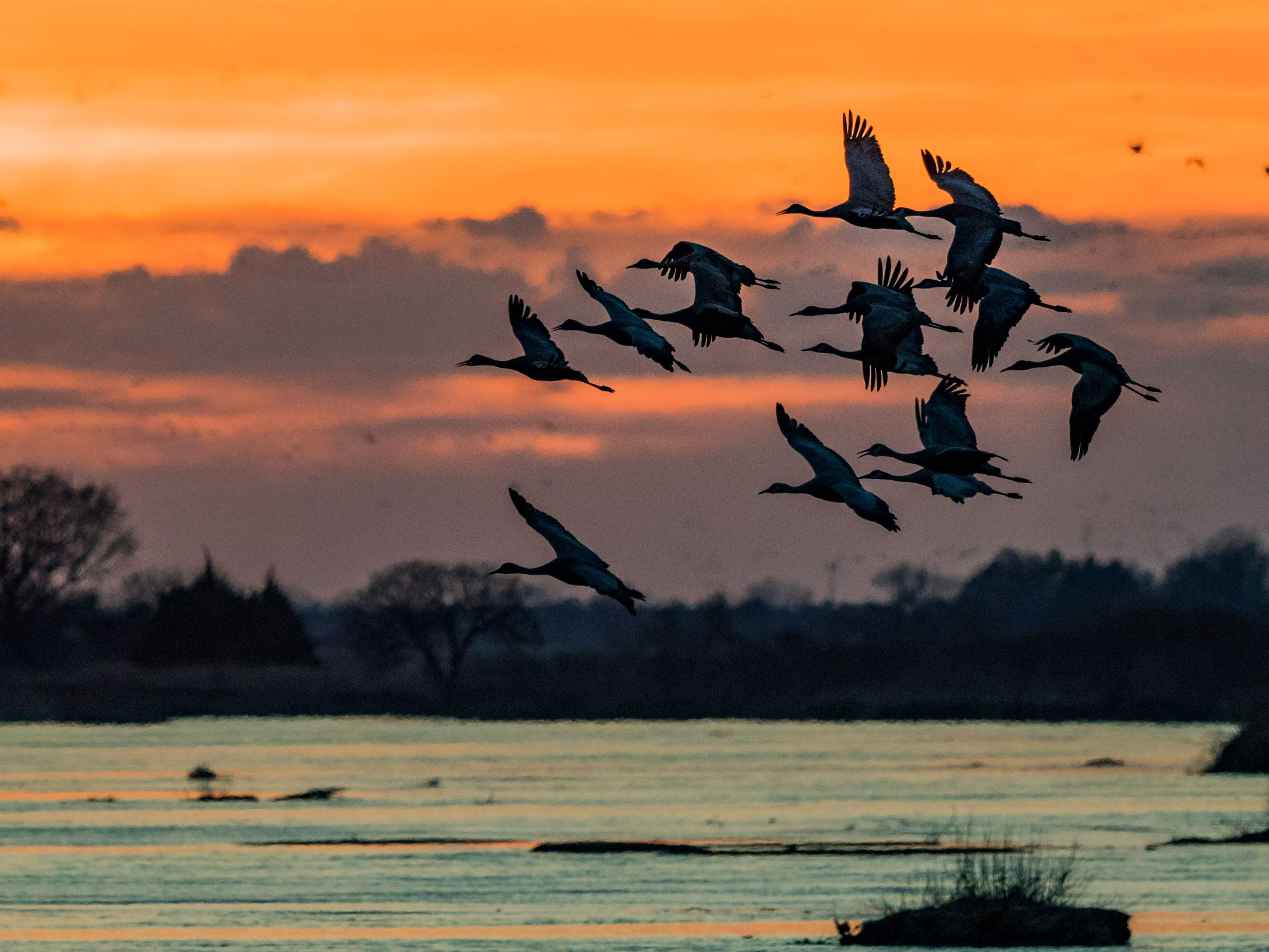 It Was Twilight And Sandhill Cranes >> Sunrise And Sunset From Late February To Early April Are Prime
