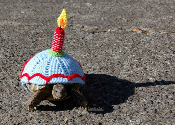 Cake Is The New Black Tortoise Turtle and Animal