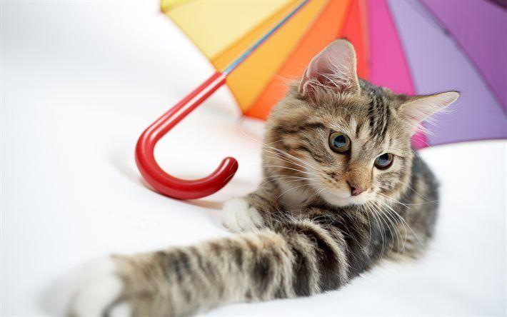 Herunterladen Hintergrundbild Katze Regenschirm Niedliche Ti
