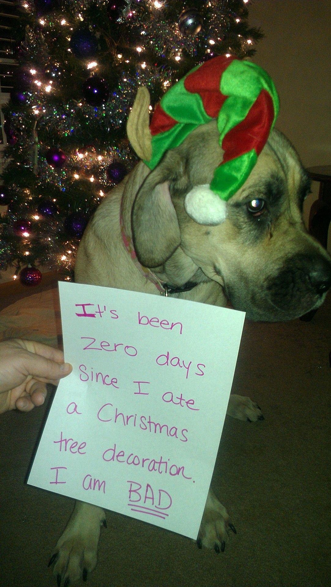 It S Been Zero Days Since I Ate A Christmas Tree Decoration I Am Bad Christmas Tree Decorations Dog Shaming Tree Decorations