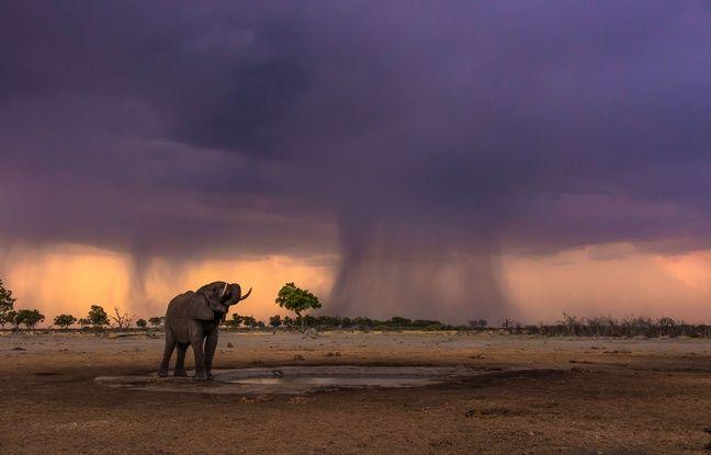 Quiz Connaissez Vous Bien Le Botswana Protection Des Animaux Botswana Afrique