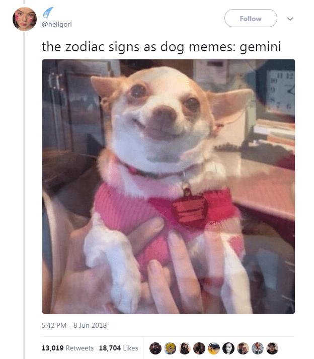 The 12 Zodiac Signs As Dog Memes Animal Memes Dog Memes Funny Animals
