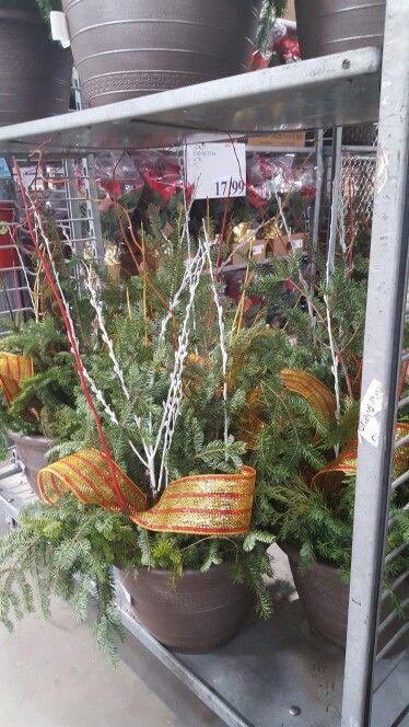 Costco Diy Patio Planters Christmas Plants And Display 400 x 300
