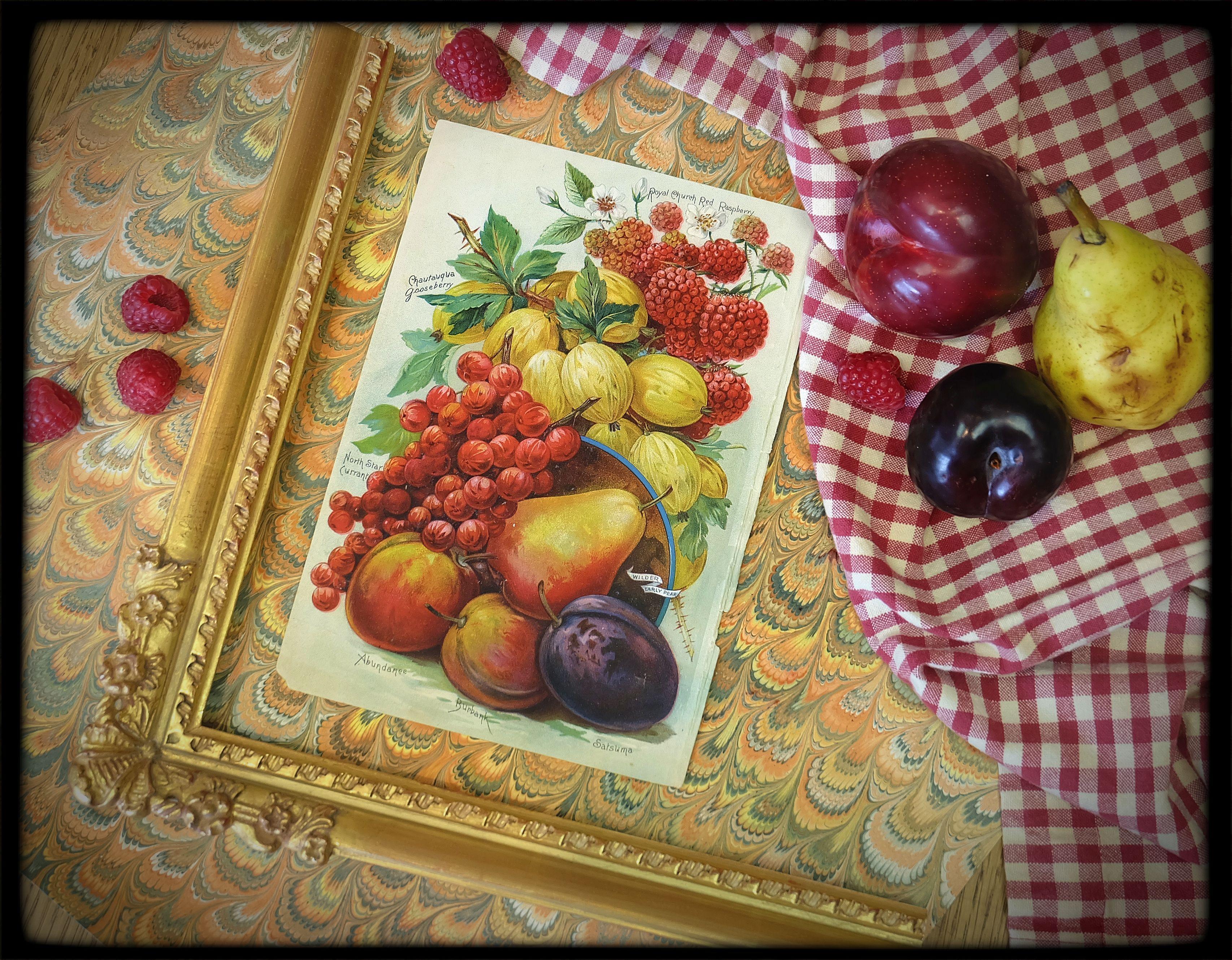 Framer\'s Picnic | Things to Frame | Pinterest | Picnics