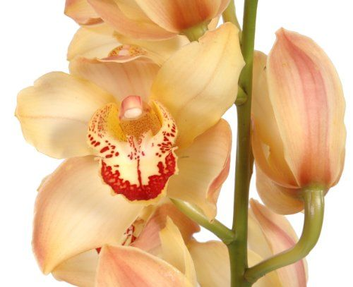 Fresh Flowers Orchids Peach Orang Cymbidium Orchids Pink Rose Bouquet Orchids
