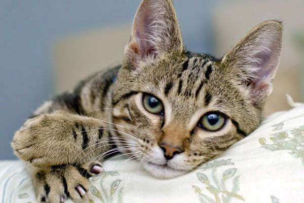 Do Cats Grieve? 5 Ways to Help a Sad Cat Mourn a Feline