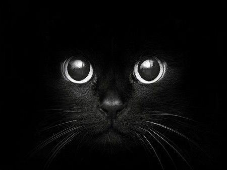 Round Cat Eyes - Desktop Nexus Wallpapers