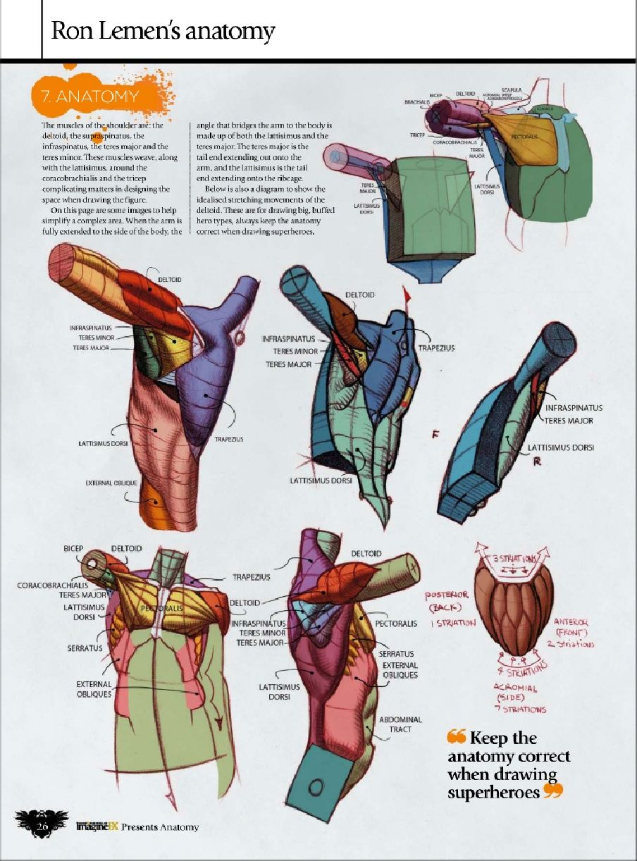 Ron Lemen Anatomy!