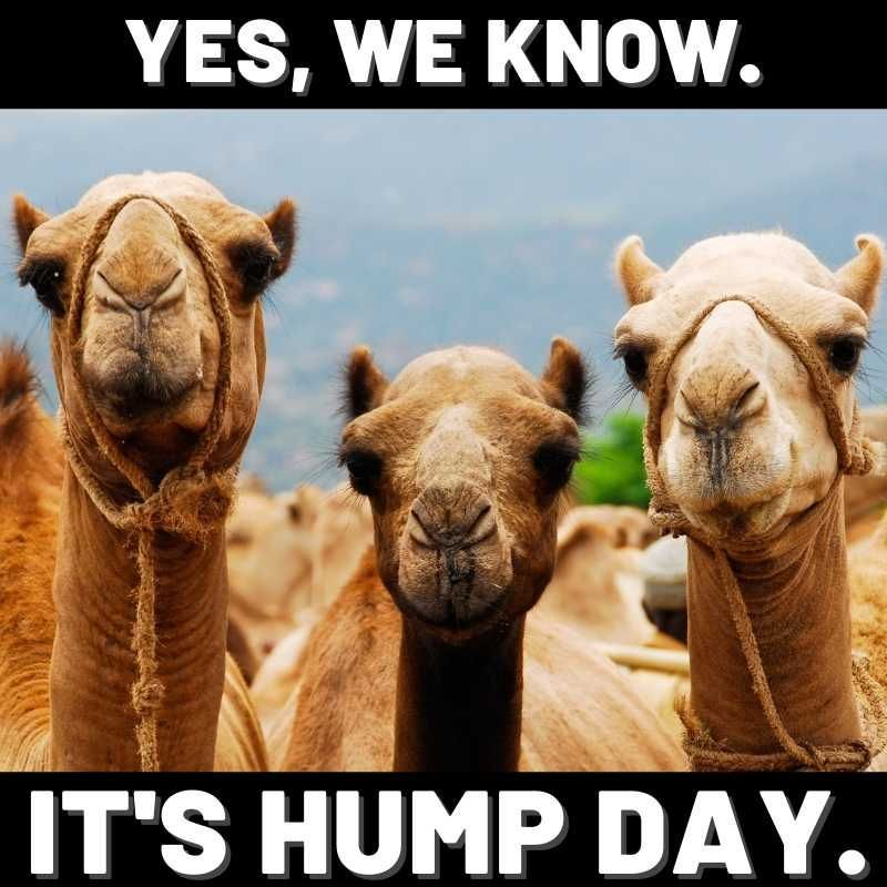 20 Hump Day Memes To Help You Laugh Thru Wednesday In 2021 Funny Hump Day Memes Funny Friday Memes Camels Funny