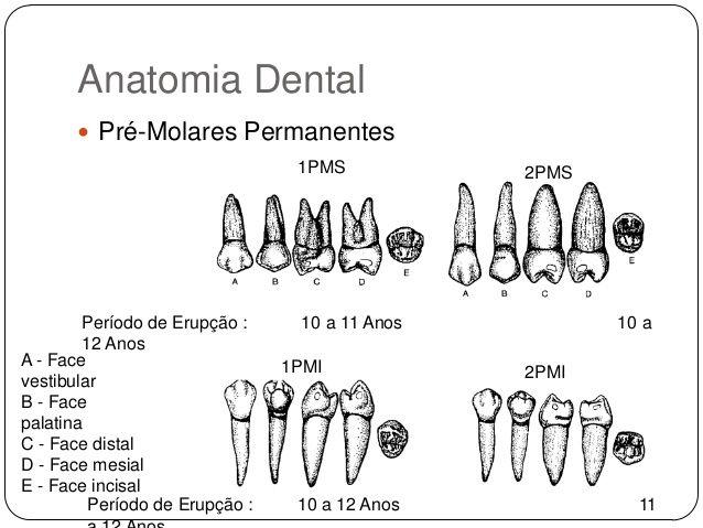 Resultado de imagem para radiologia odontologica | radiologia ...