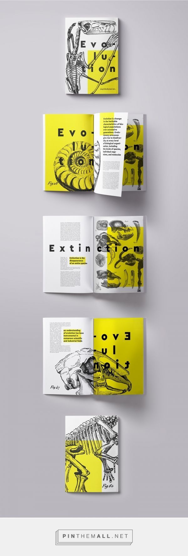 Photo of Evolution | Booklet on Behance created via Pin #Behance #Booklet #creat #d …