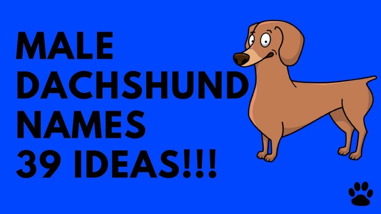Male Dachshund Names 39 Very Best Ideas Names Cute Girl