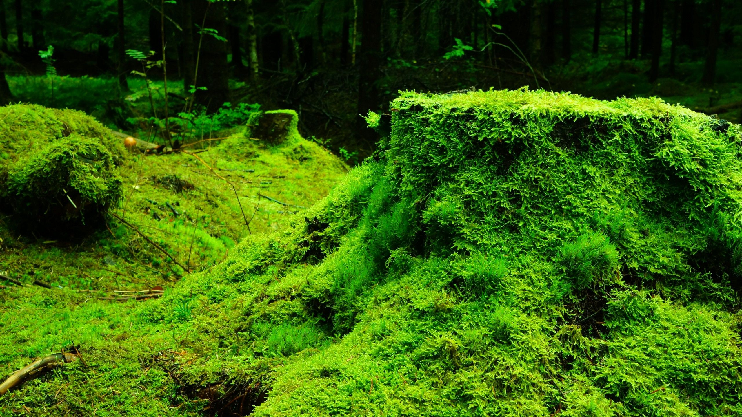 Dark Green Nature Wallpaper Android With High Resolution 2560x1440 Px 133 MB