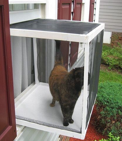 Cat Window My Cats Need This Pinterest Cat Window Cat