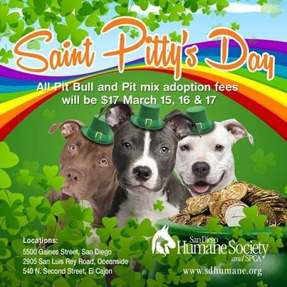 13 Ways To Celebrate St Patrick S Day Animal Shelter Adoption