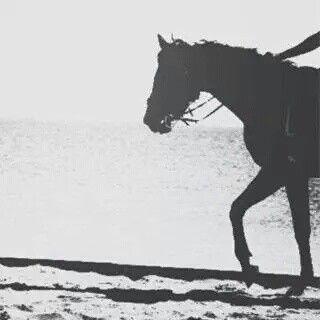 رمزيات صور عرض حصان Disney Pictures Horses Profile Picture