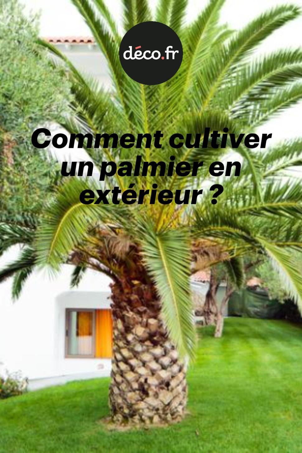 Comment cultiver un palmier en extérieur ? en 2020