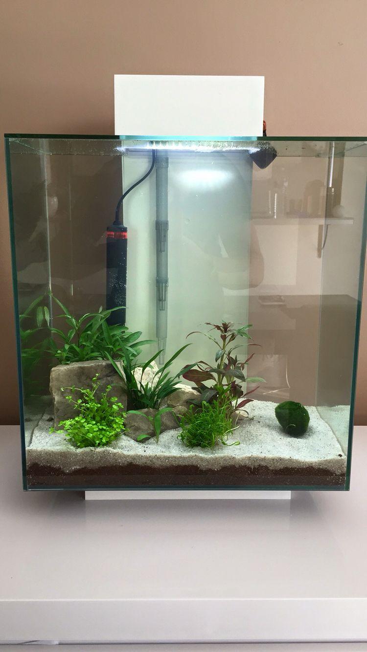 fluval edge 46l fish freshwater and aquarium pinterest acuario terrario y ornamentacion. Black Bedroom Furniture Sets. Home Design Ideas