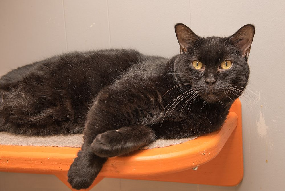 Wonton Available For Adoption Orange Room Adopted 2 23 2018
