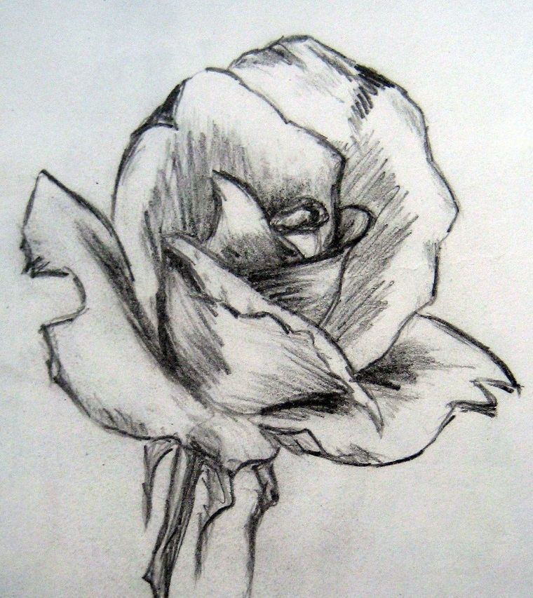 Disegno Di Una Rosa Chiaro Scuro Con Matita Disegni Belli Ma Facili Disegni A Matita Facili Disegni A Matita Disegni