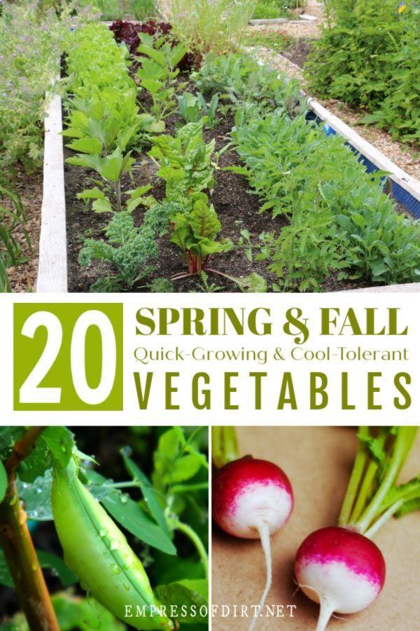 20 Quick Growing Veggies To Grow In 4 6 Weeks Strawbale 400 x 300