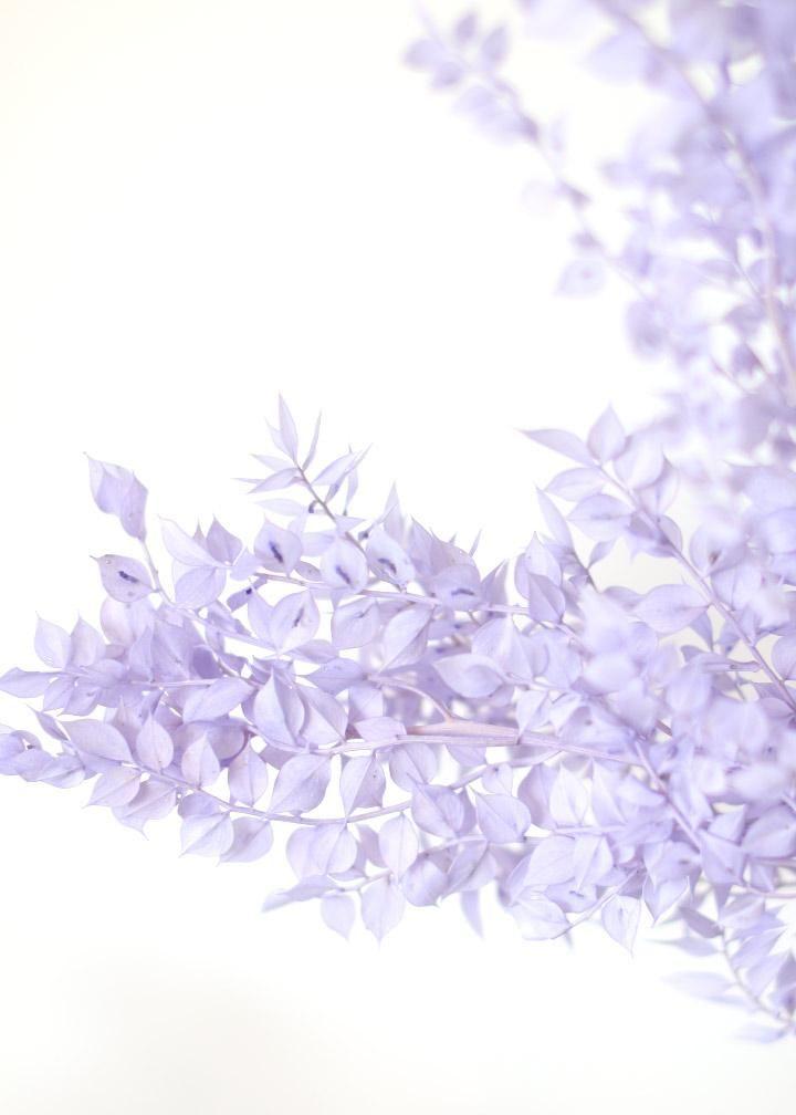 Preserved Ruscus Leaves In Lavender In 2020 Purple Aesthetic Light Purple Wallpaper Lavender Aesthetic