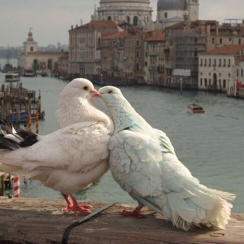 Photo of Image about love in Italia by Necromance on We Heart It