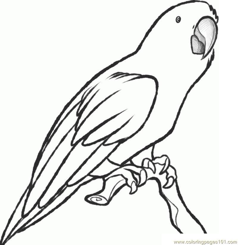 Parrot Coloring Page Free Parrots Coloring Pages Papagei Zeichnung Umrisszeichnungen Zeichenvorlagen