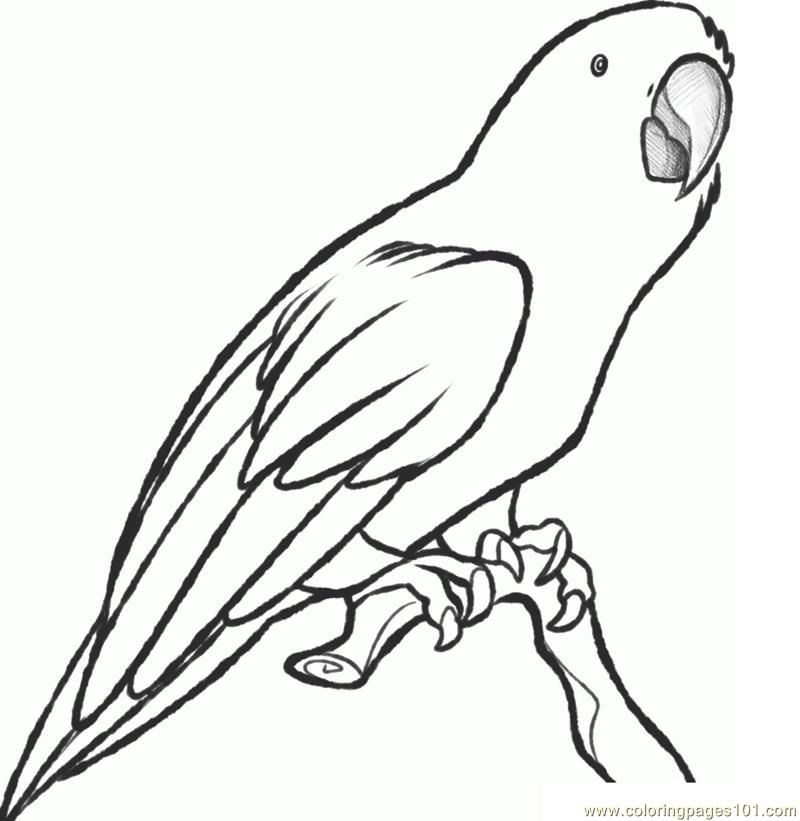 Parrot Coloring Page Parrot Drawing Sketches Coloring Pages