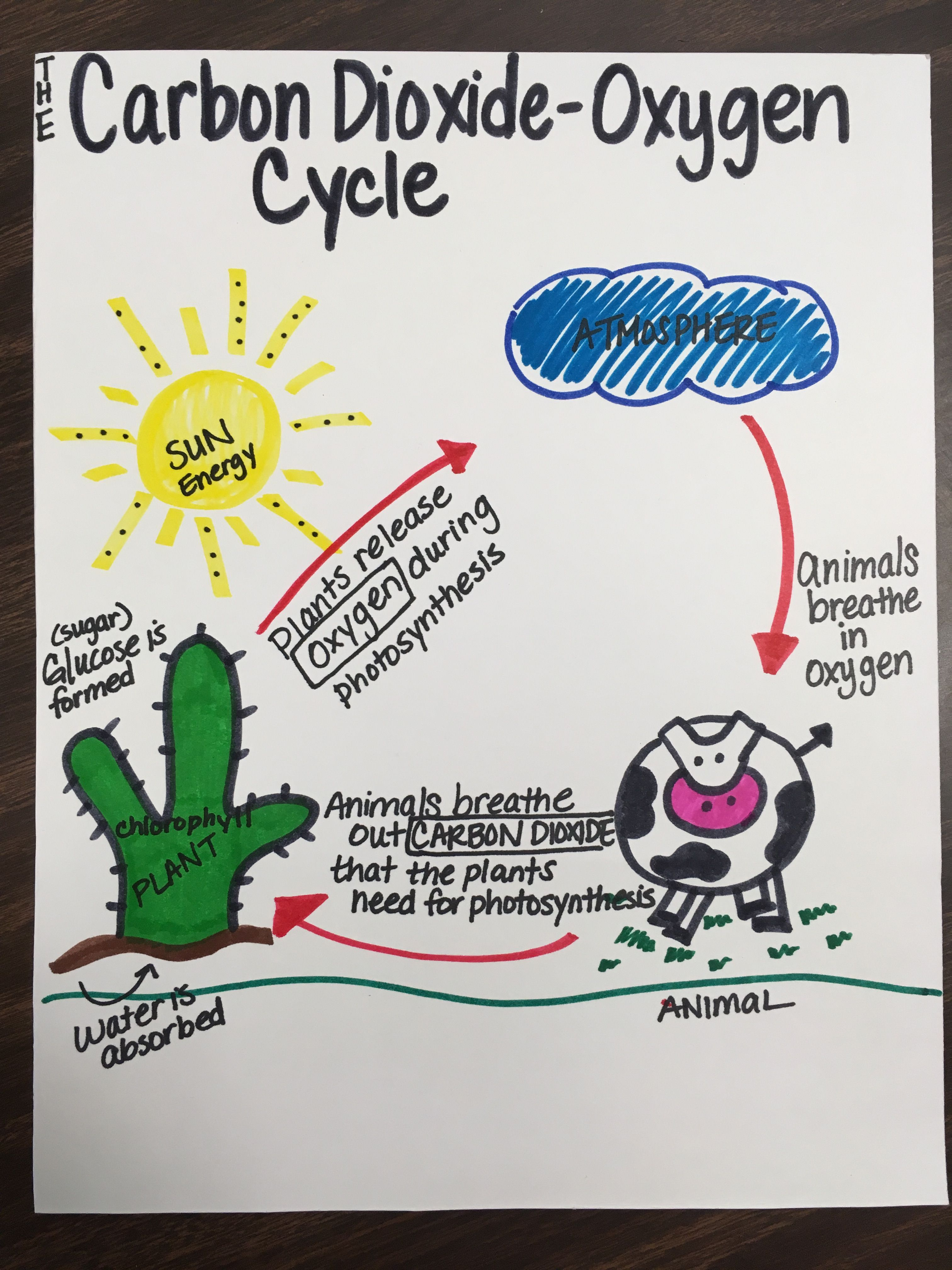 Oxygen Cycle Diagram Blank