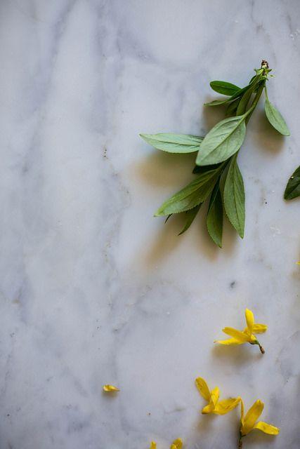 foraged spring florals, forsythia by Beth Kirby | {local milk}, via Flickr