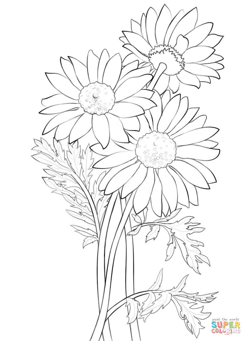 Daisy Super Coloring Drawing Flowers Tutorials