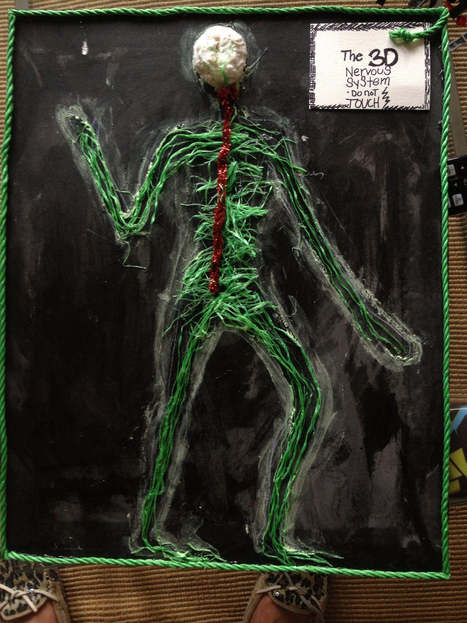 Nervous system model | Science | Nervous System, System ...