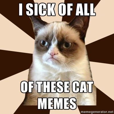 tard the grumpy cat meme - Yahoo! Search Results