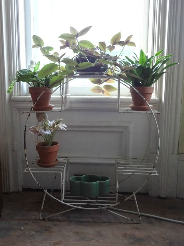 magical plant stands   Plant Life   Pinterest   Plants, Gardens ...