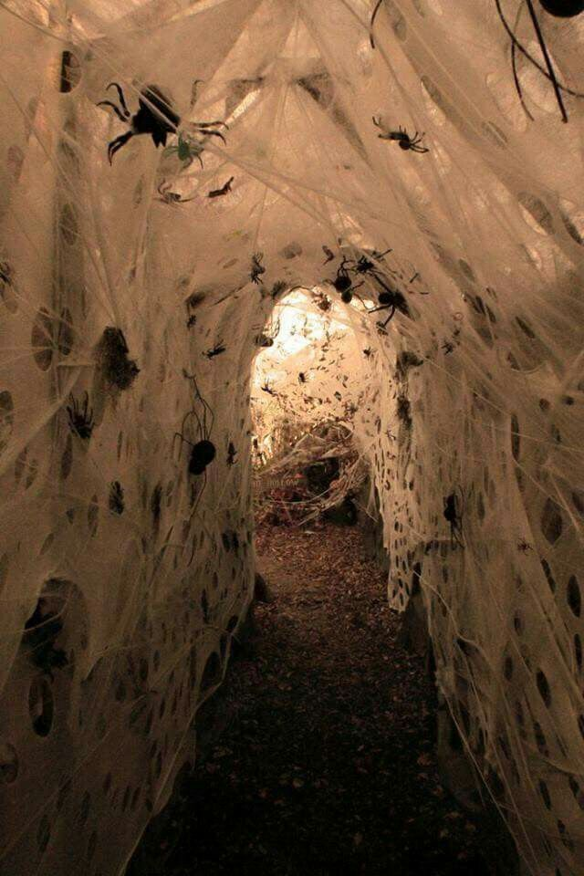 Spider Tunnel \u2026 Pinteres\u2026 - decorate cubicle for halloween