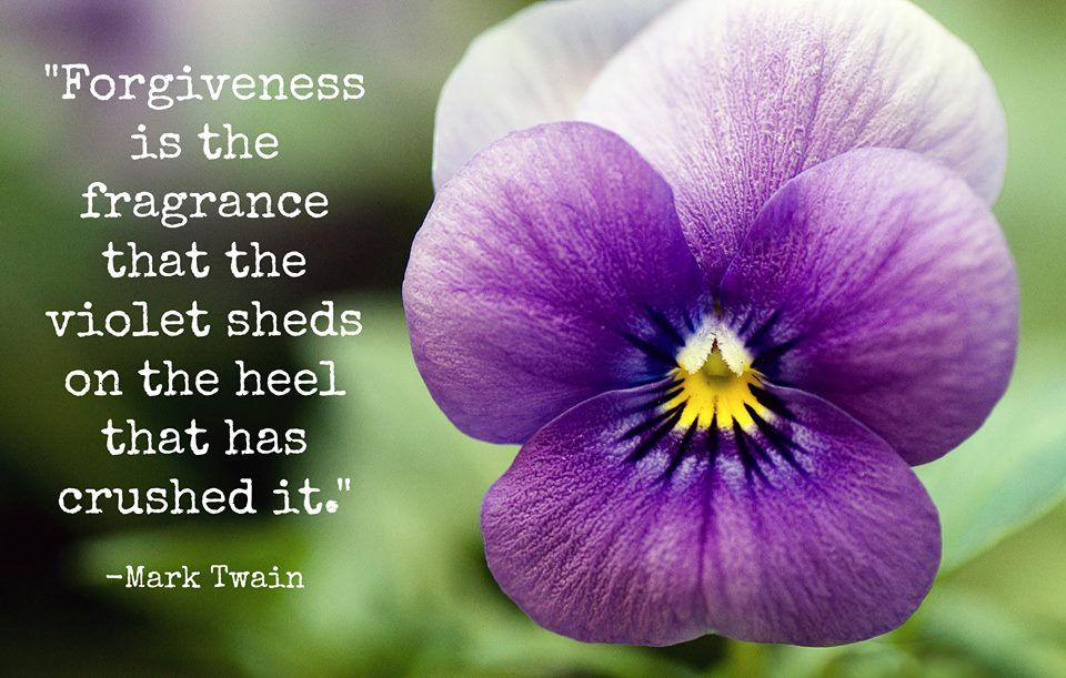 Timeline Photos Good Housekeeping Pansies Flowers Flower Meanings Forgiveness