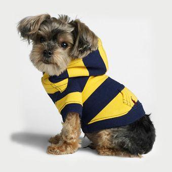Ralph Lauren Dog Hoodie