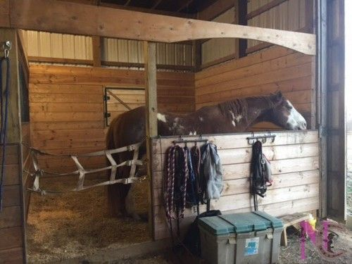 Custom Arched Horse Stall Fronts
