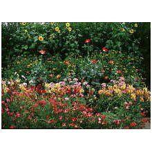 Cut Flower Seed Garden Mat Instant Roll N Grow Seeded Just