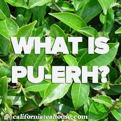 What is Puer