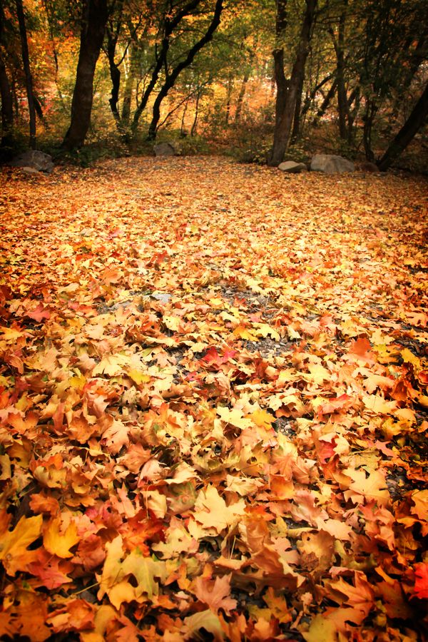 Carpet of Leaves by Laura Johnson, via 500px