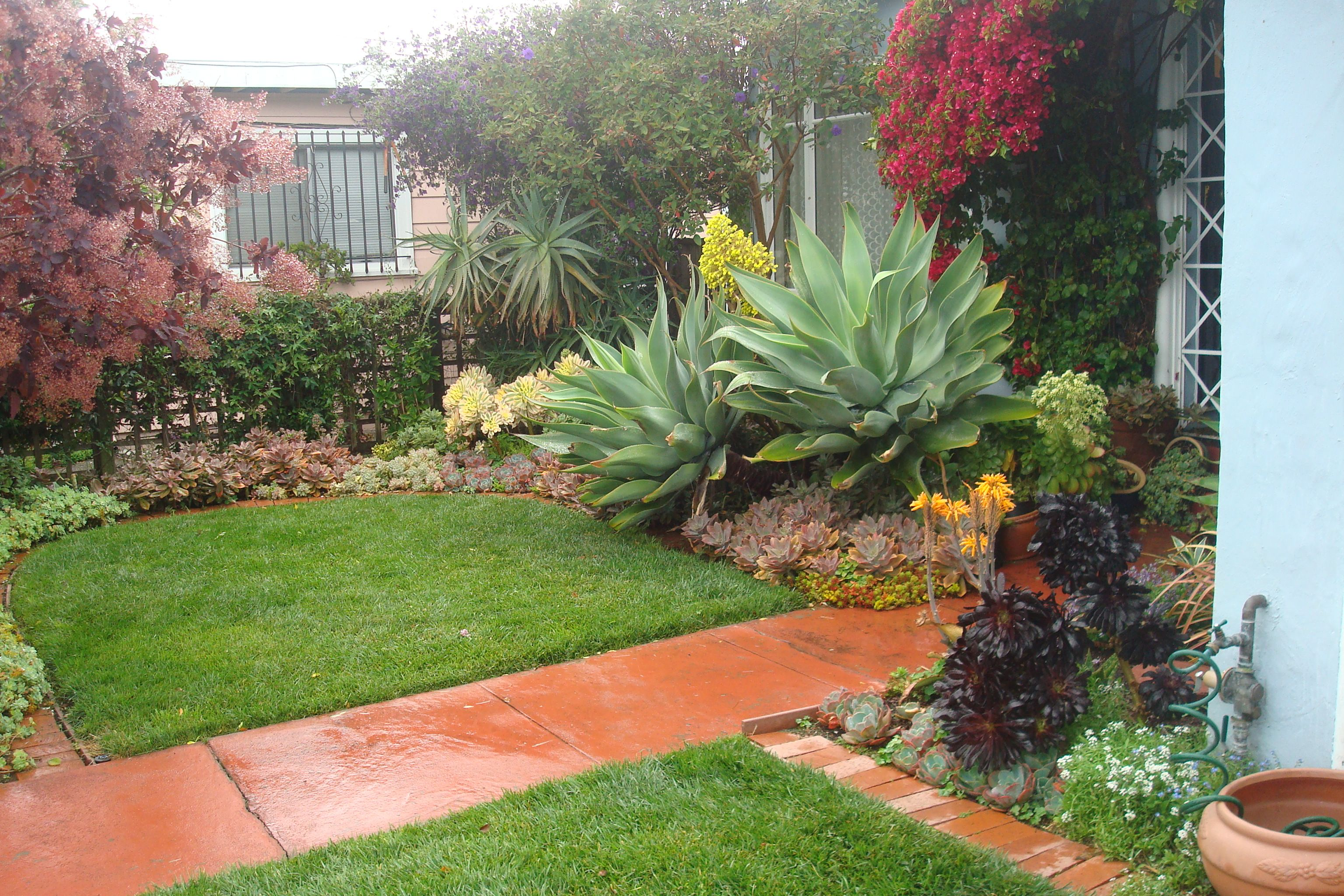 Succulent front garden google search succulents for Garden design with succulents