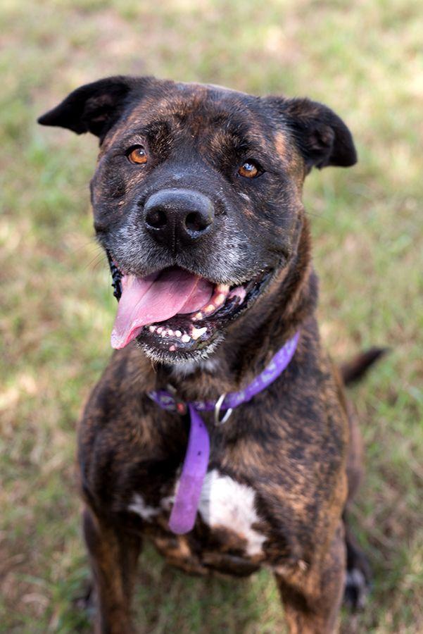 Rscpa Queensland Storm Adoption Cuddling Dogs
